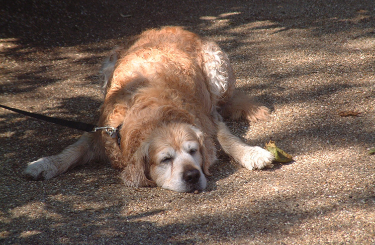 Sleeping Dog Max